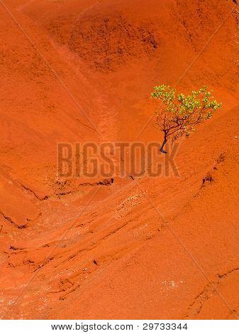 Single Bush In Dry Red Rocks