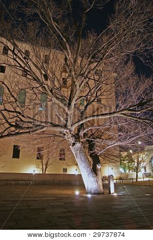 Survivor Tree - Oklahoma City National Memorial