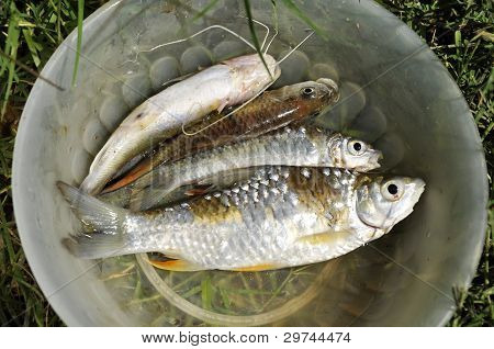 Fish Fresh Water Grass Bowl Outdoor