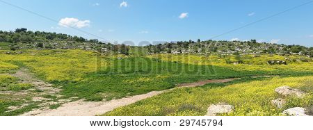 Mediterranean hills landscape in spring