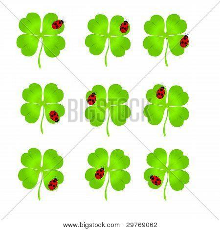 Luck Clover Eith Ladybirds On It