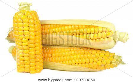 Corn On The Cobs