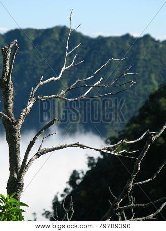Nebel Formen auf Kauai Kalalau-Tal