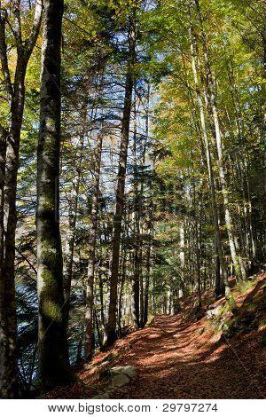 Forest In The Selva De Irati