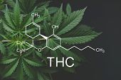 Thc Formula, Tetrahydrocannabinol . Cbd And Thc Elements In Cannabis,growing Marijuana, Despancery B poster
