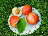 Ripe Yellow-red Orange Peaches. Fresh Harvest. The Best Healthy Snack.colorful Fruits In White Bowl  poster