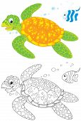 picture of terrapin turtle  - Clip - JPG