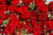 Bouquet Of Red Roses. Fresh Red Rose Flower On Rose Petal Background, Valentines Day, Love poster
