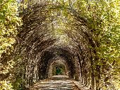 stock photo of crips  - Twigs and branches make up this natural archway in a crips fall day - JPG