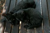 Two Pretty Black Kitties. Two Pretty Black Kitties Sleeping On Bench In Summer Day, Close Up. poster