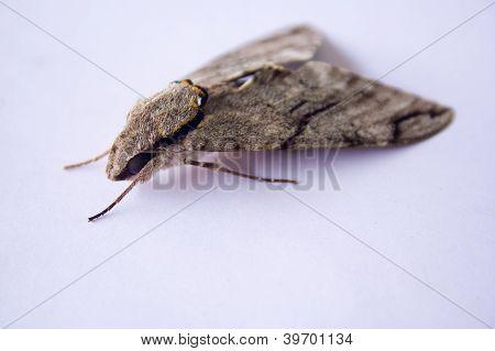 Moth Eyes.