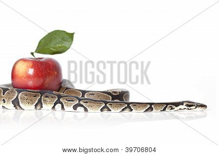 Python With Red Apple