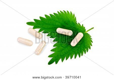 Capsules Beige On Two Leaf Nettle