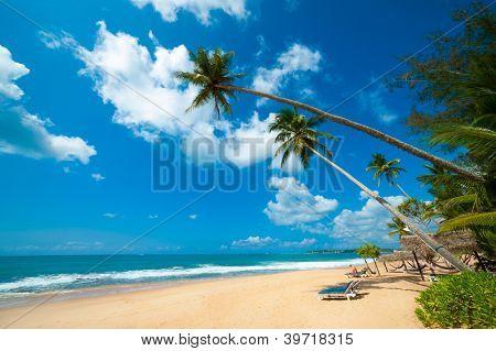 Tropical beach in Sri Lanka. Man reading book sitting on the desk chair.