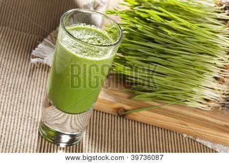 Tiro de hierba de trigo orgánico verde