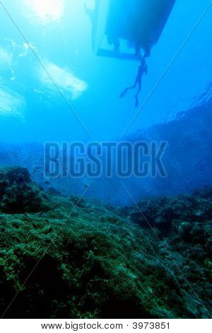 Indo Pacific Coral Reef