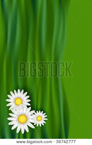 Chamomile Flowers Illustration Design