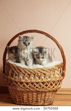 Three Grey Kittens