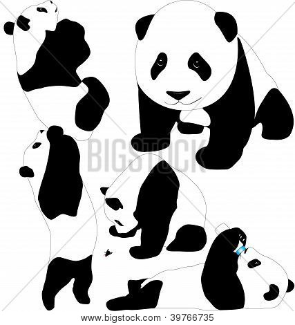 Pandas vector silhouettes. Adult and babies. Editable.