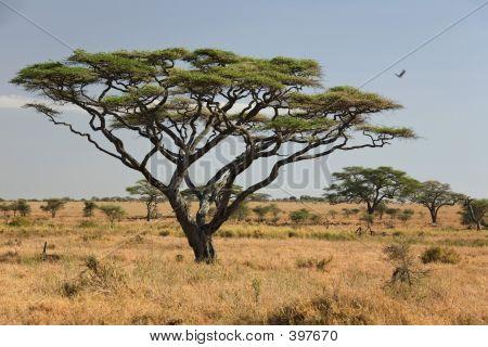 Afrika Landschaft, serengeti