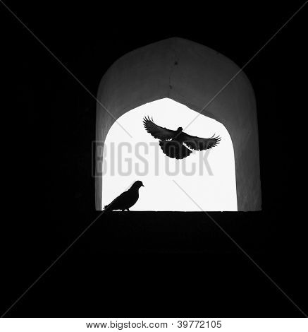 Concept background, dove of hope flying through window.