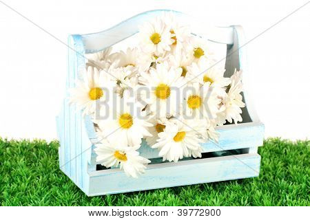 Flowers in wooden box on grass isolated on white