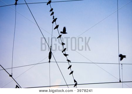 Ravens Sitting On Wire