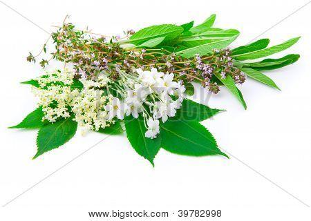 Bando de ervas: Sálvia, tomilho, sabugueiro, Sabugal