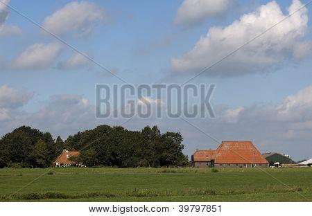 dutch farm