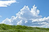 foto of thunderhead  - This is a picture of grass and thunderhead I have taken in August - JPG