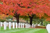 stock photo of headstones  - Arlington National Cemetery near to Washington DC - JPG