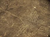 picture of ica  - Nazca lines figure of the hummingbird located next to the panamerican highway south of Lima - JPG
