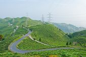 stock photo of darjeeling  - Road along tea plantation on the mountain in Darjeeling India