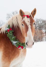 stock photo of gentle giant  - Christmas horse  - JPG