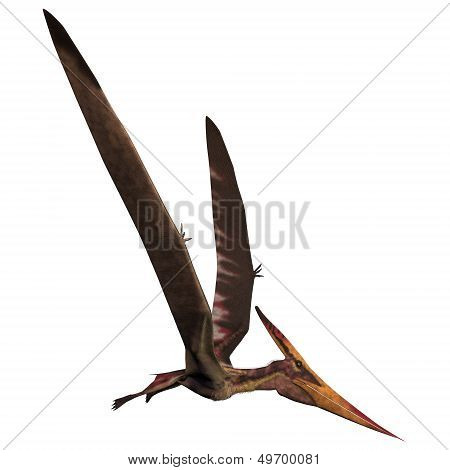 Pteranodon On White
