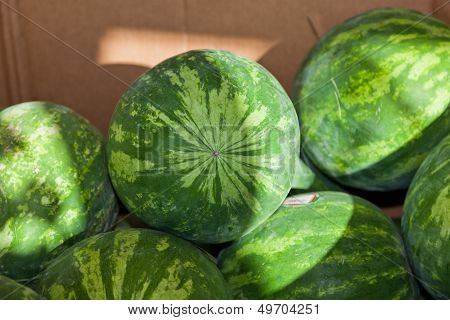Watermelons In A Box