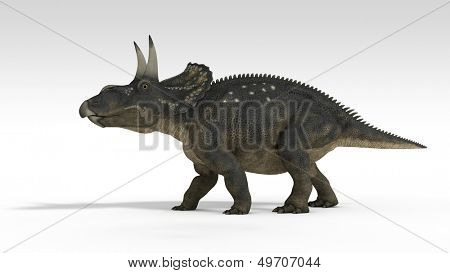 diceratops (triceratops) isolated