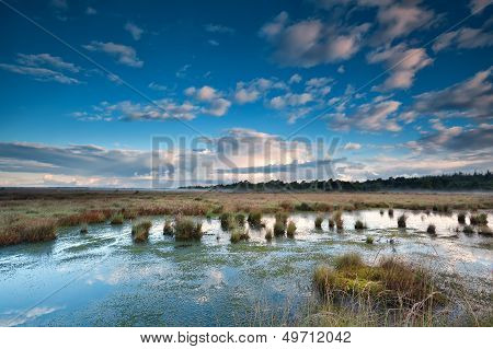 Blue Sky Over Swamp