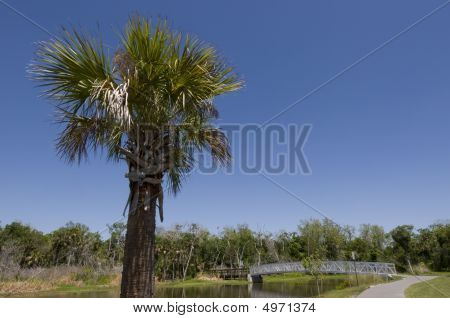 Palm Tree At Chain Of Lakes