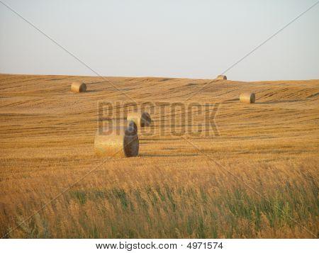 Rolos de feno no campo
