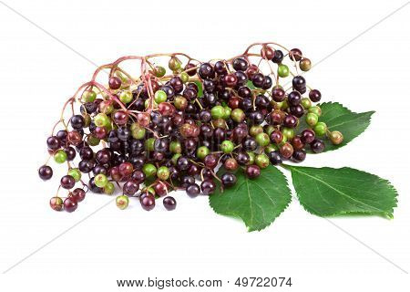 elderberry with green leafs isolated on white background