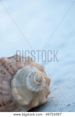 Seashell On Concrete