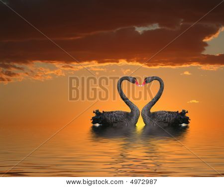 Two Swans At Sunset