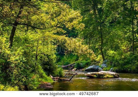 Beautiful Stream Scene Along Gunpowder Falls In Baltimore County, Maryland.