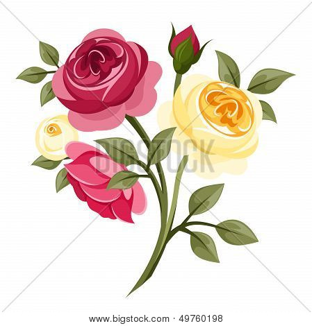Colorful roses. Vector illustration.