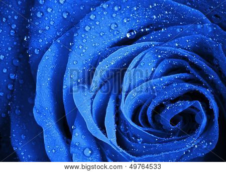 Blue Rose Flower With Water Droplets. Stylized Close-up Photo With Shallow Depth Of Field