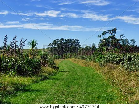 Grassland Hiking Trail With Bushes And Trees