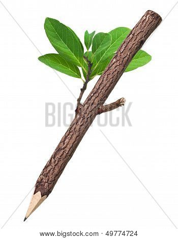 Wooden Pencil In White Background