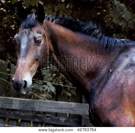 horse, ??????