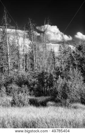 Teton Countryside